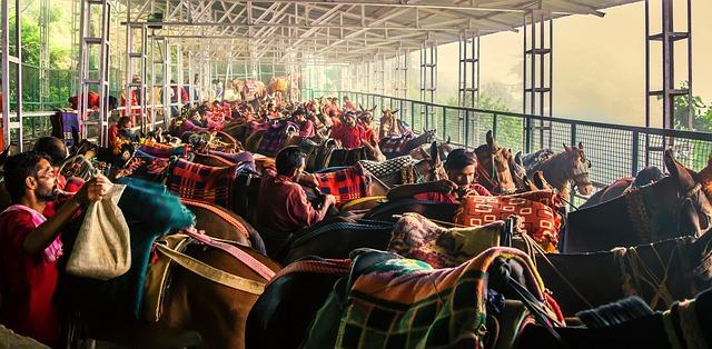 koně před závodem