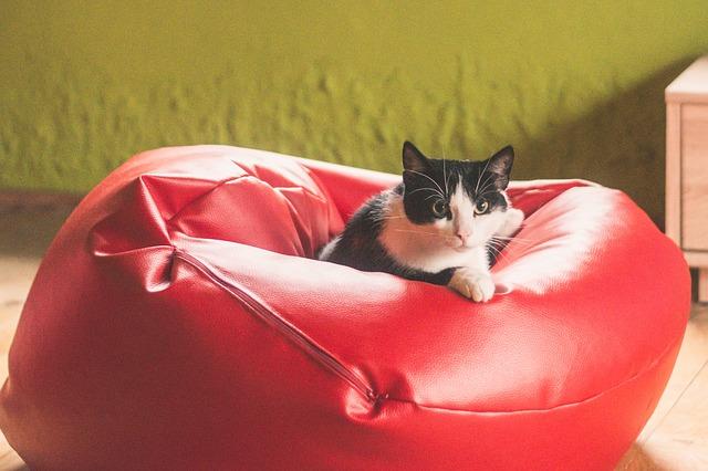 kočka v sedacím vaku